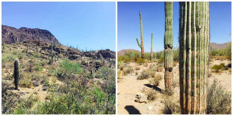 Tucson7